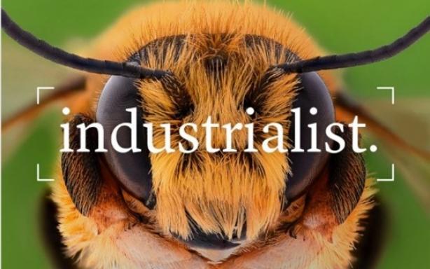 bee head on