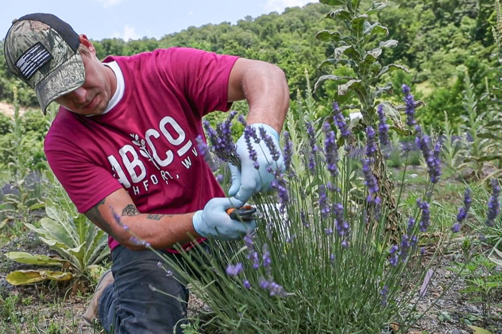 Regenerating communities in West Virginia with a project growing lavender.